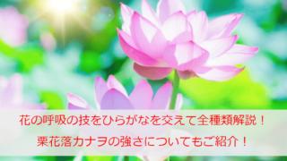 鬼滅の刃「花の呼吸」の技をひらがなを交えて全種類解説!栗花落カナヲの強さについてもご紹介!